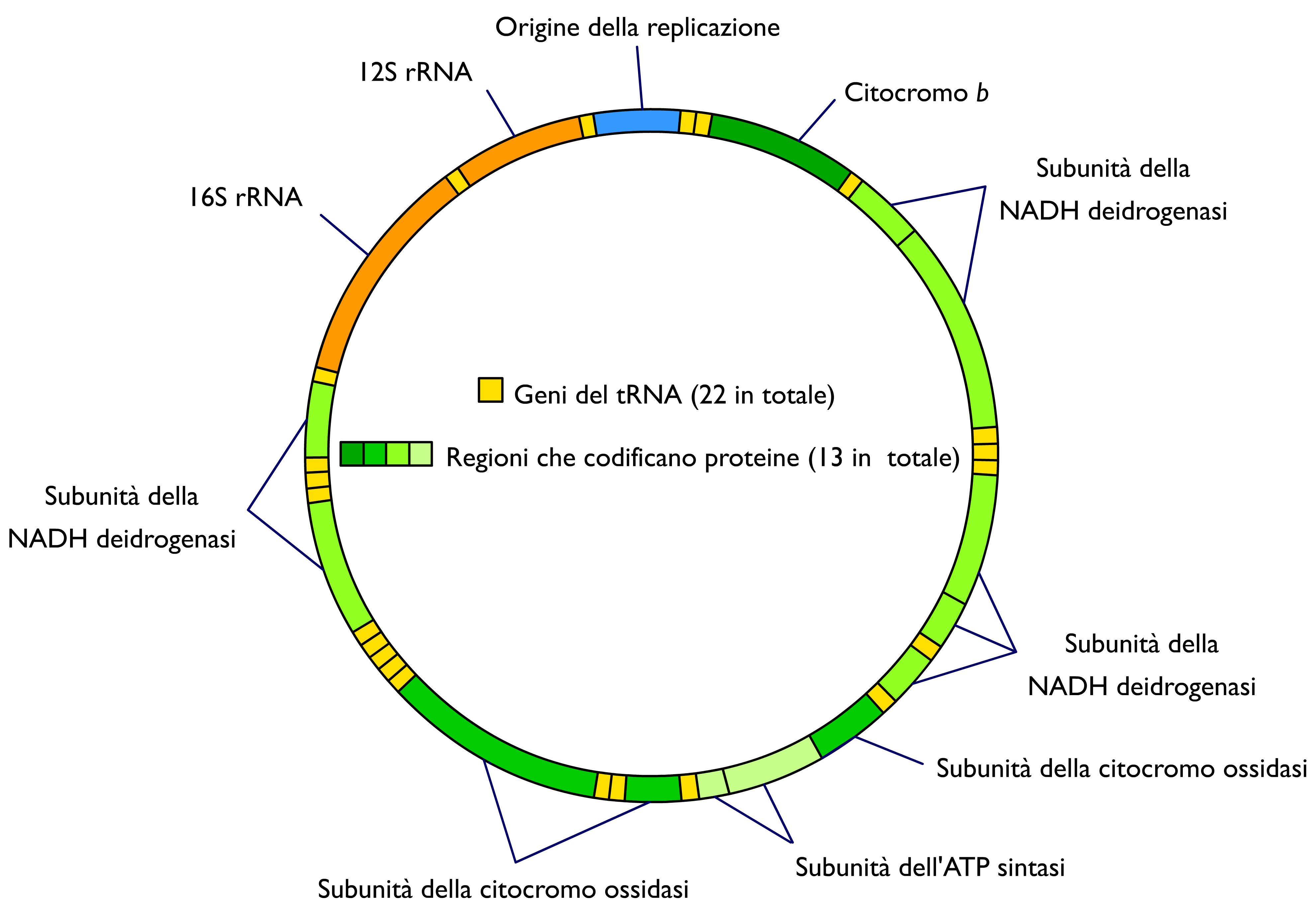 an in depth description of the human dna The first description of what would later be called crispr is from  a second unsuccessful attempt to alter the dna of non-viable human embryos using crispr .