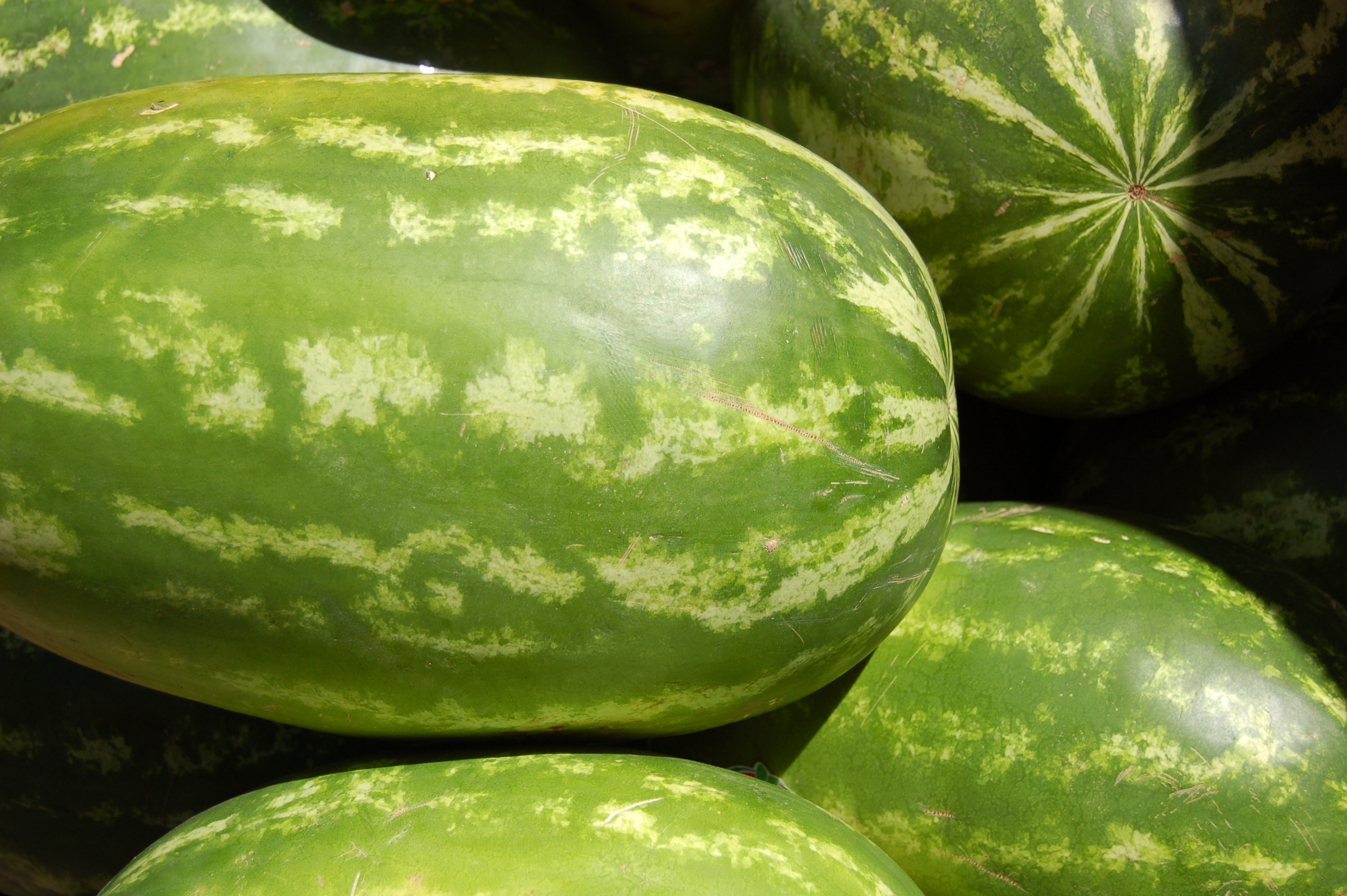 History Of The Watermelon File Pasteque Jpg Wikimedia Commons