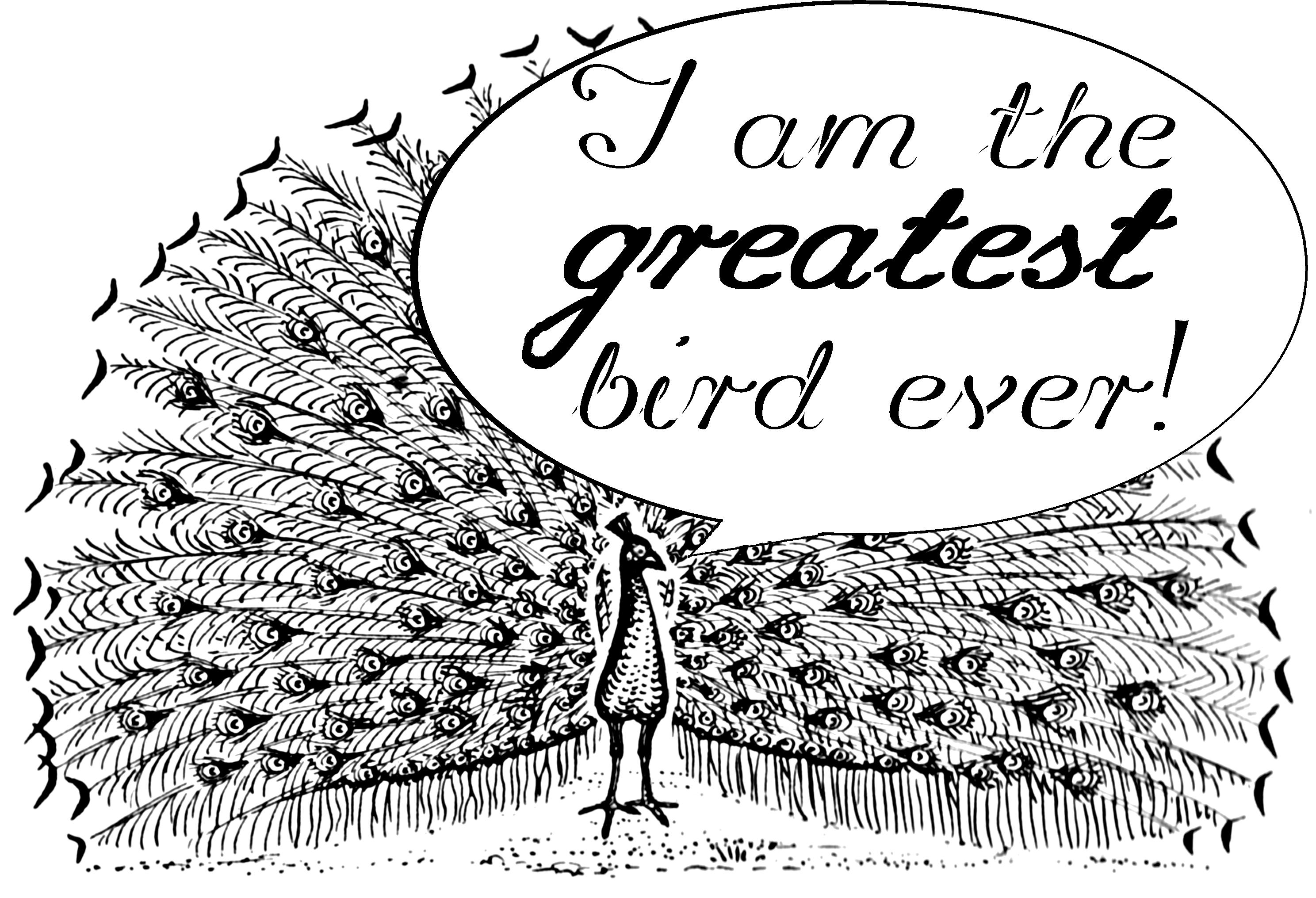 Filepeacock Termsg Wikimedia Commons