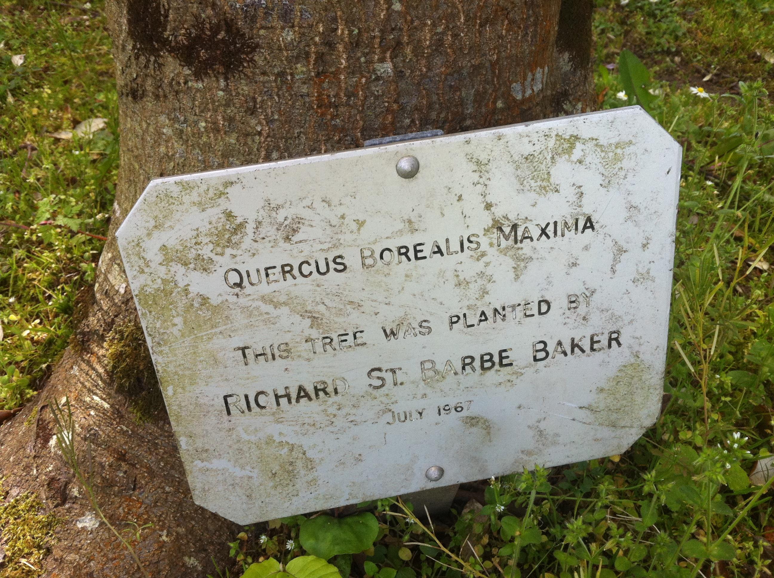 Robert baker forest conservation area