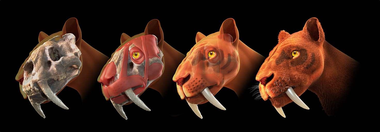 Saber Tooth Cat Toys