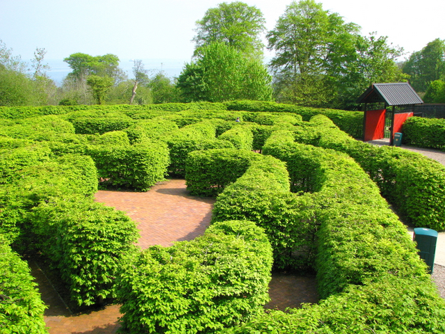 The 'Northern Ireland Maze', Carnfunnock Country Park - geograph.org.uk - 797991
