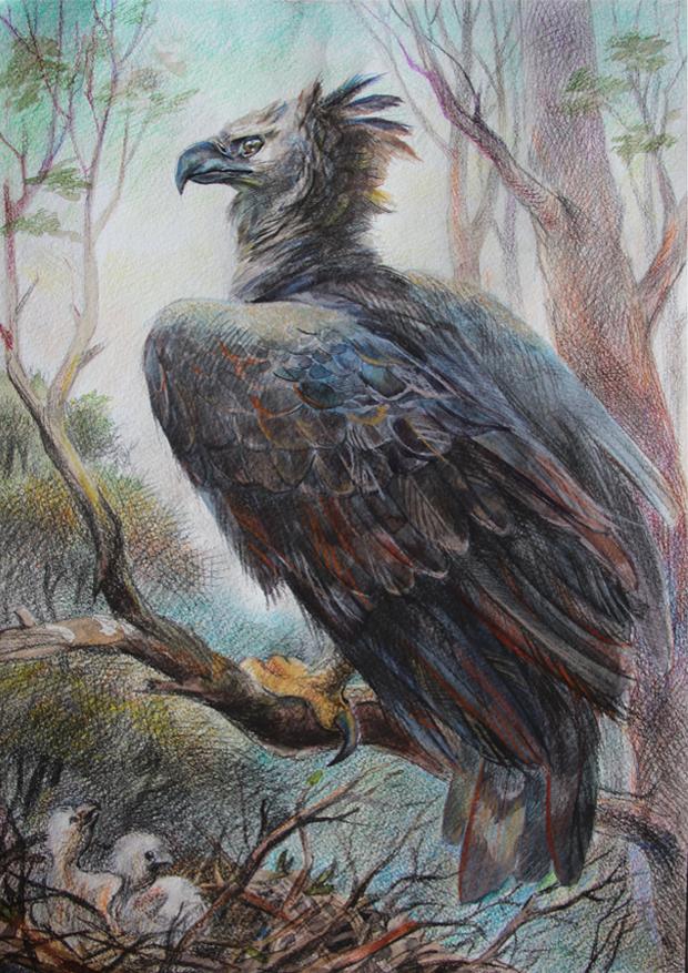 file the american harpy eagle kazartseva ekaterina nikolaevna jpg