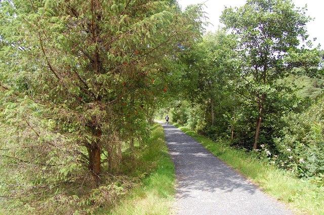 The Mawddach Trail near Dolgellau - geograph.org.uk - 1428479