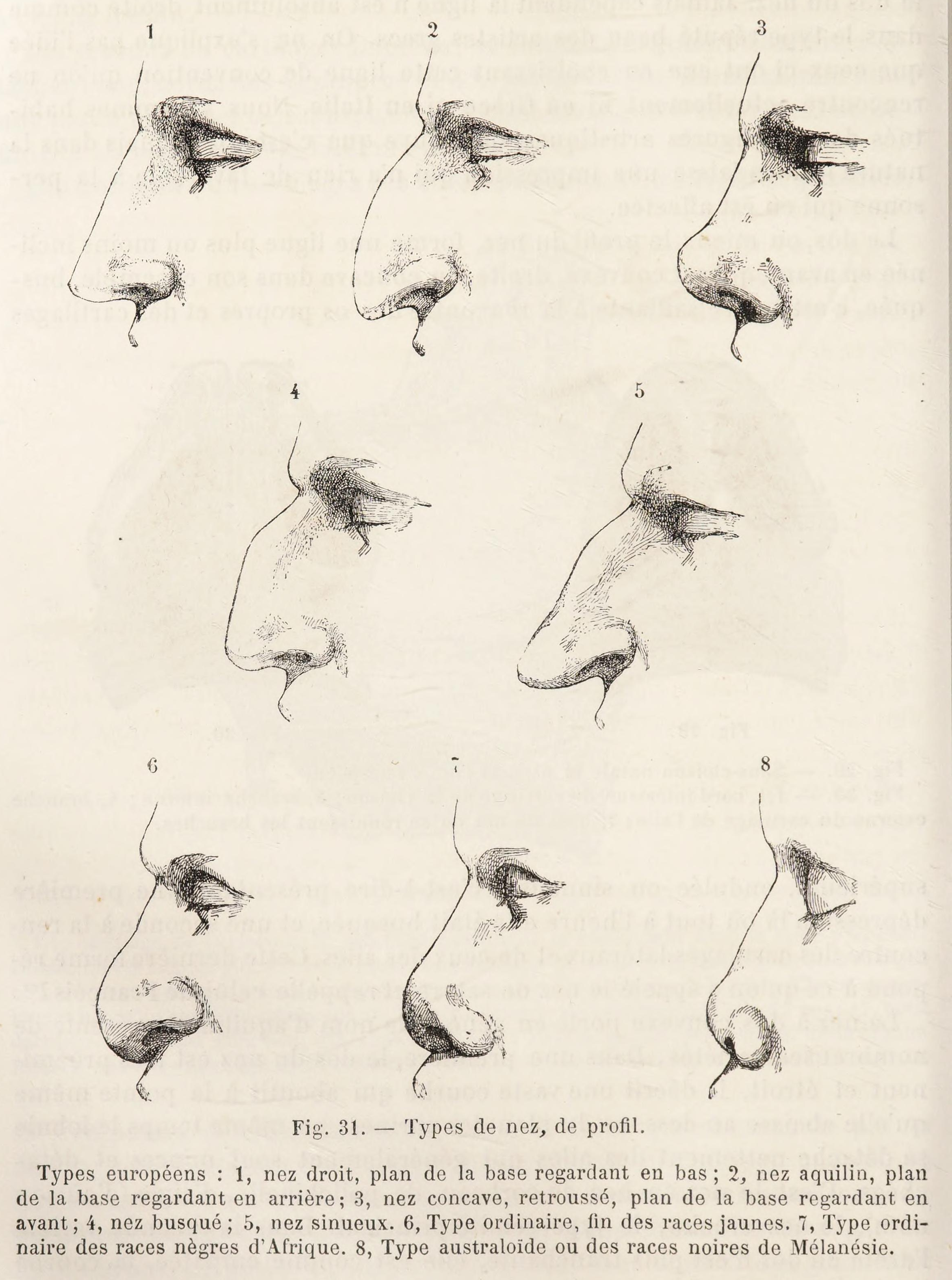File:Topinard nasal index.png - Wikimedia Commons