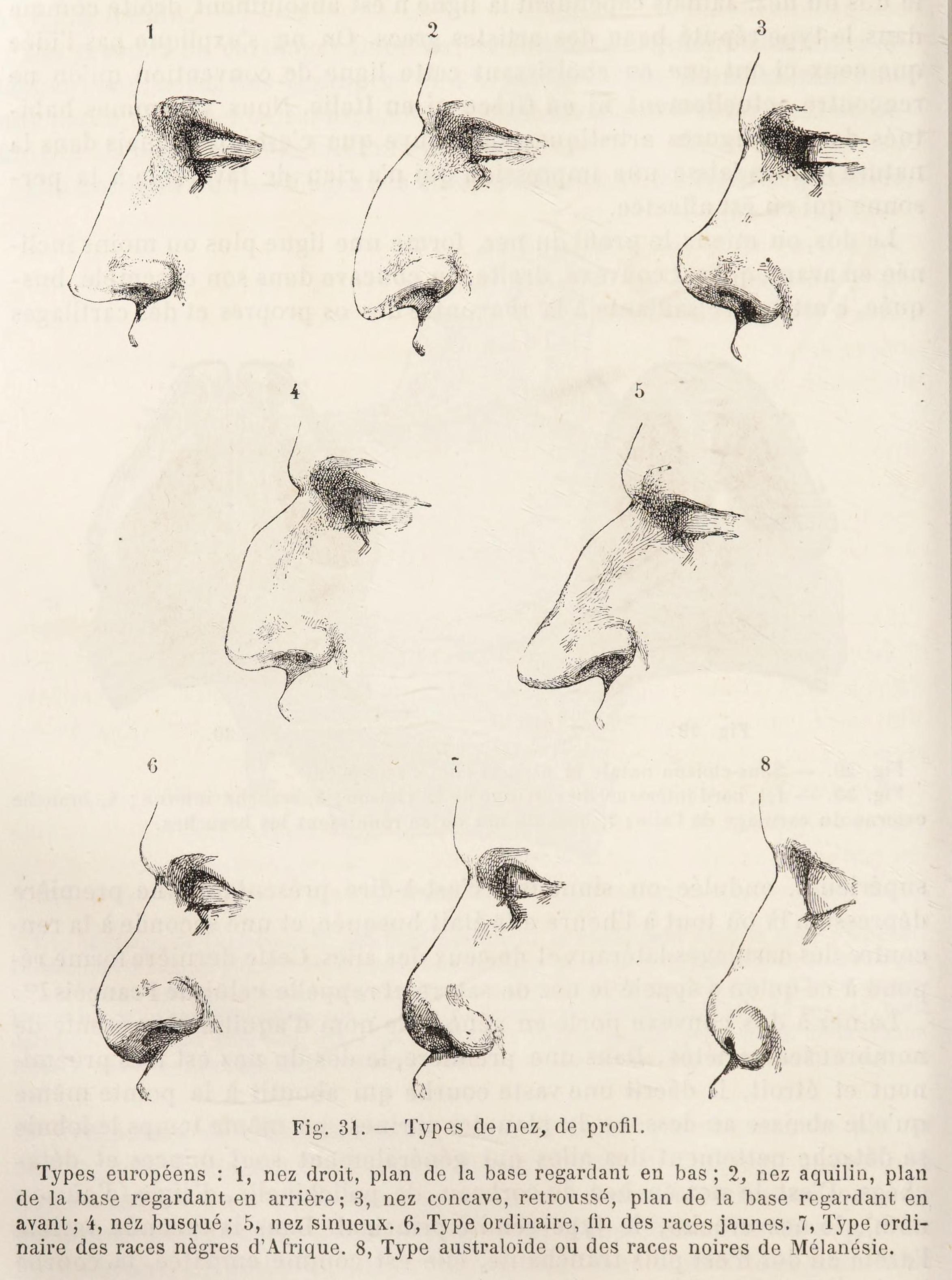 File:Topinard nasal index png - Wikipedia