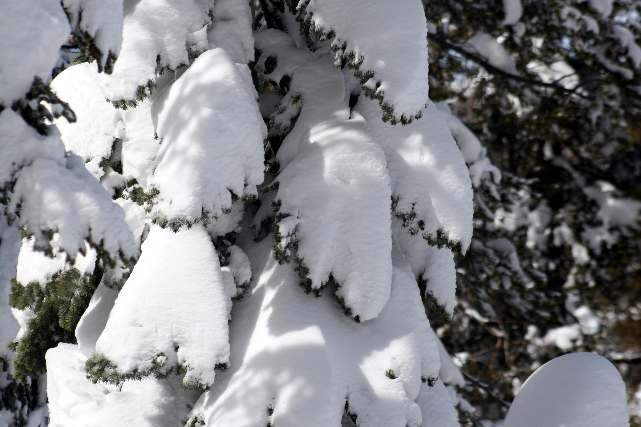 It Snowed In Ottawa