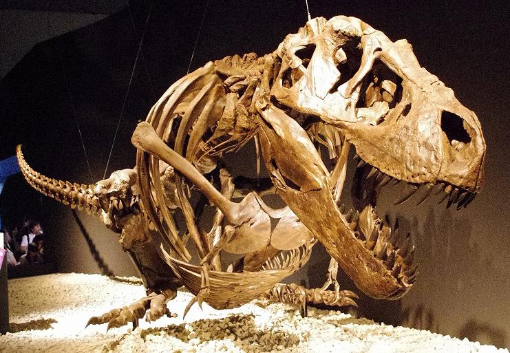 File:Tyrannosaurus resting pose.jpg