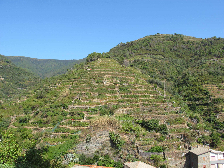 File:Vernazza, terrazze coltivate 01.JPG - Wikimedia Commons