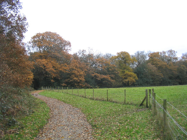 Wild Wood Trail, Hainault Forest - geograph.org.uk - 91236