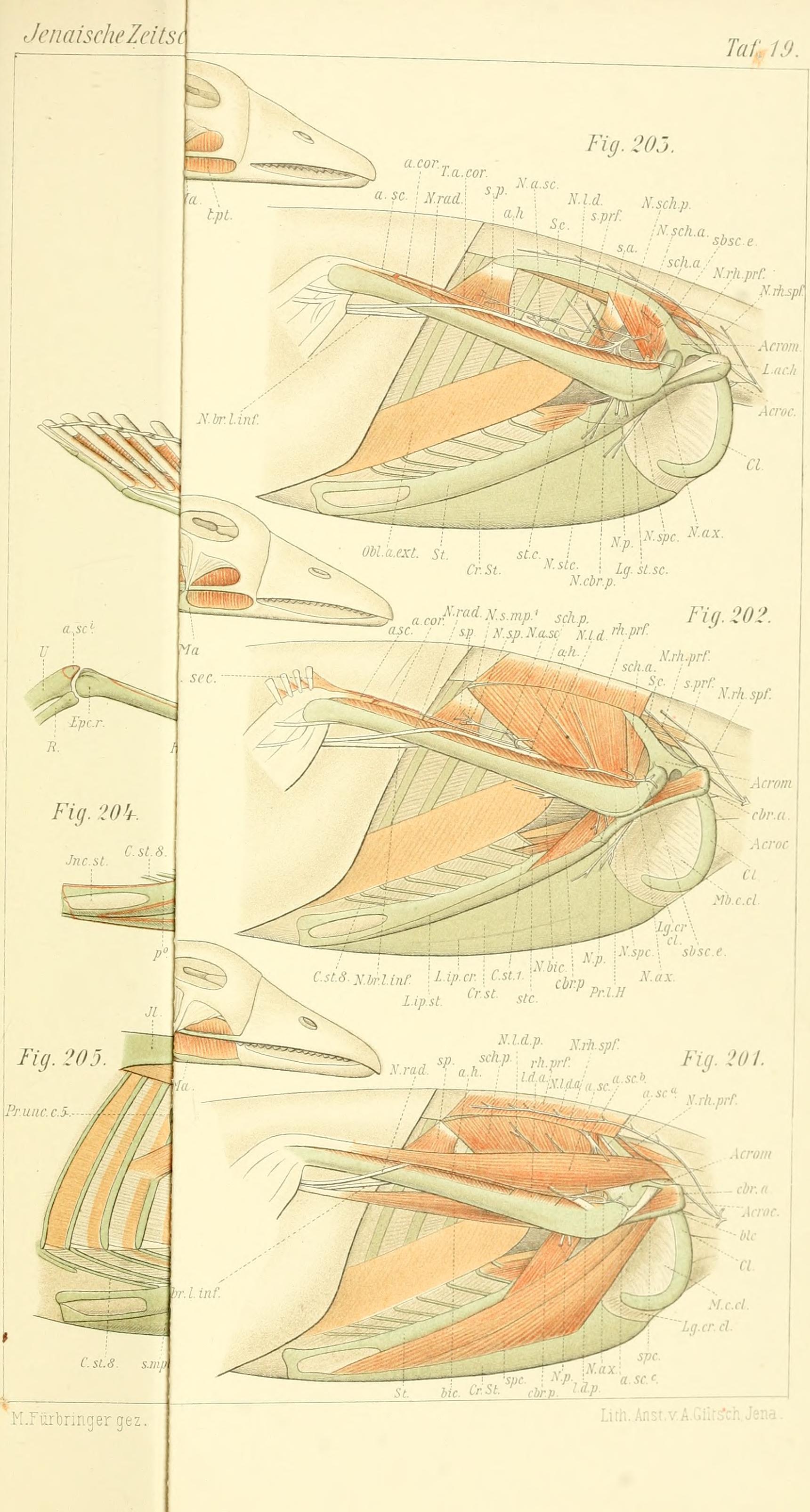 Großartig Menschliche Anatomie Und Physiologie 9. Auflage Marieb Und ...