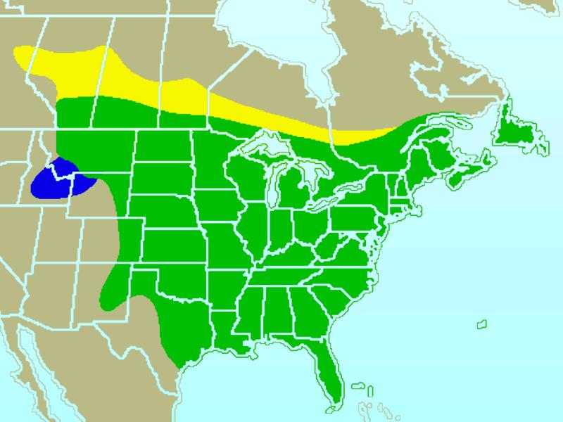 Florida East Coast Map.Blue Jay Wikipedia