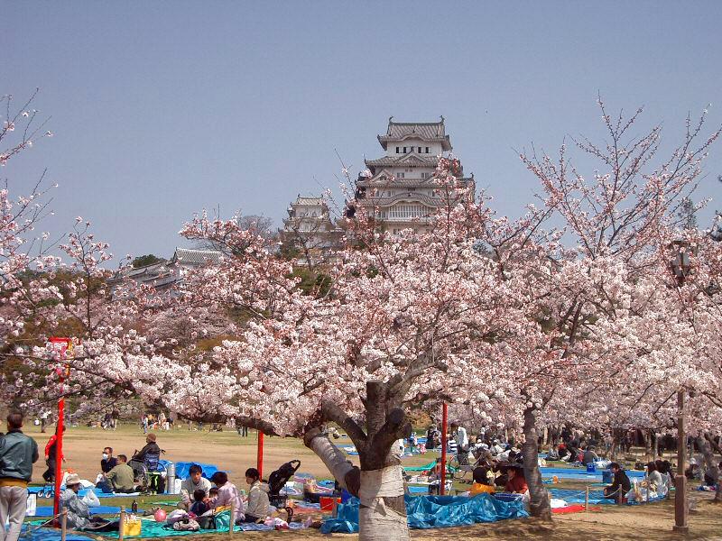 Castle Himeji sakura02 contrasted