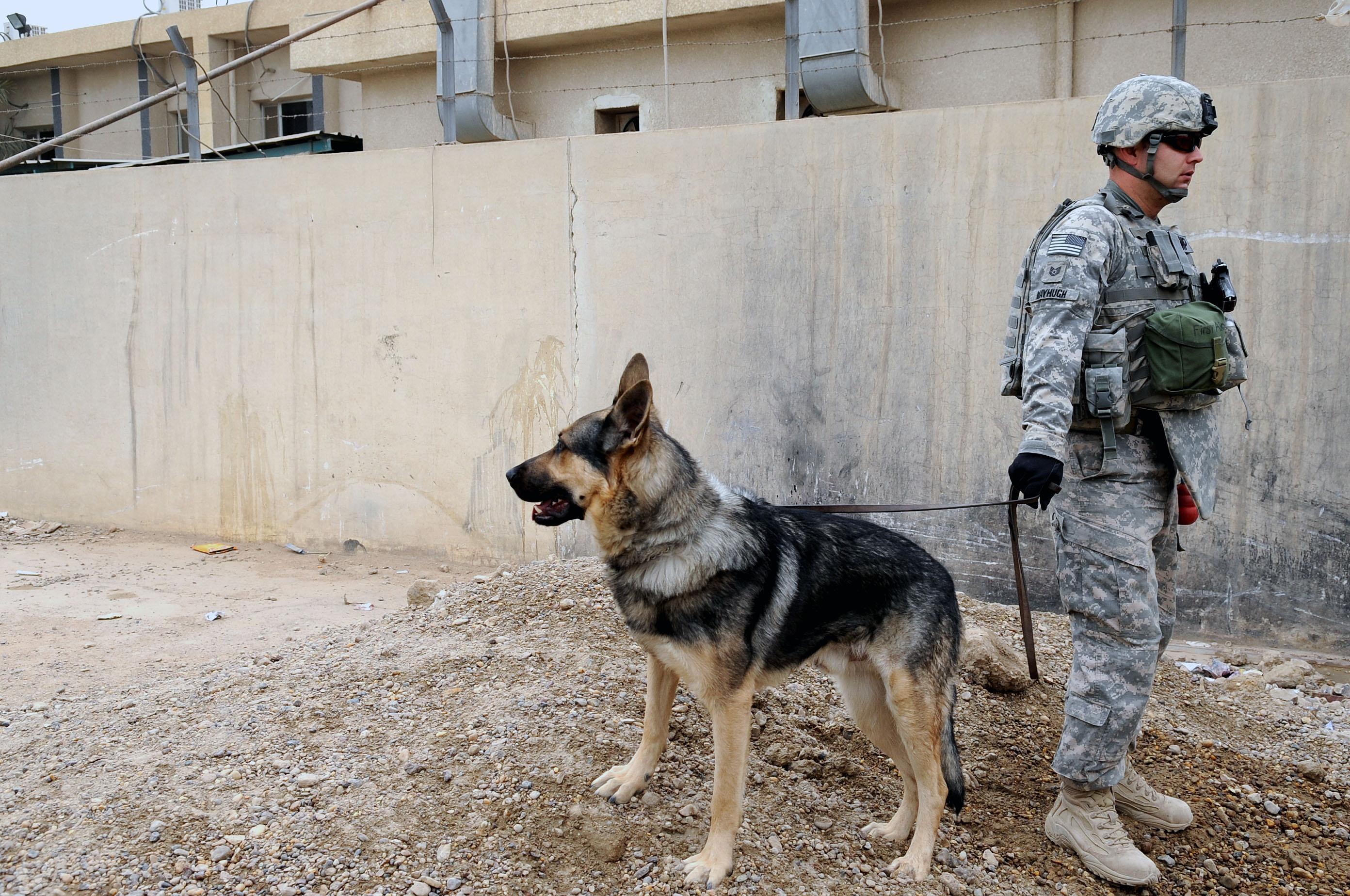Ceremony for renovations to the Alwaiya Maternity Hospital in Muhallah 902 DVIDS174242.jpg English: U.S. Air Force Tech. Sgt. Mayhugh, a dog