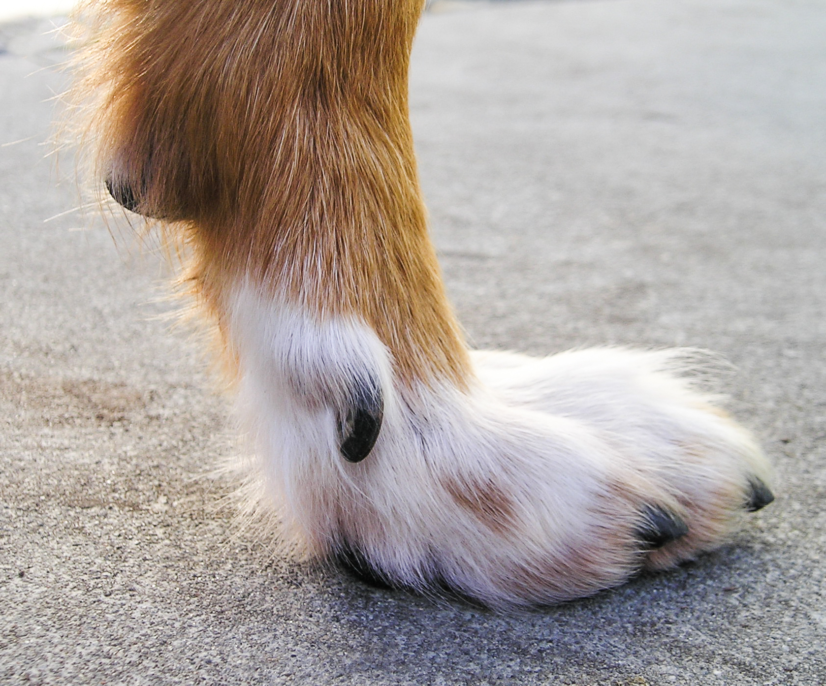 My Dog S Foot Is Cold