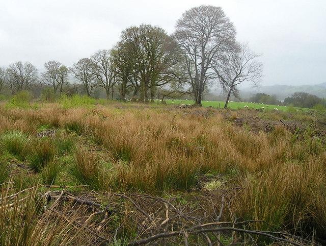 File:Felled Woodland - geograph.org.uk - 777518.jpg