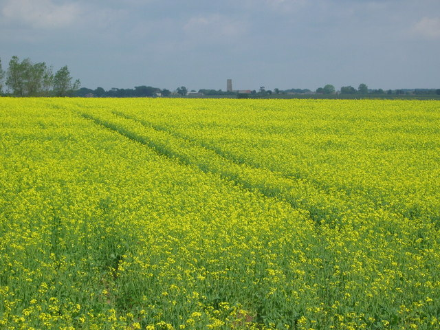 Fields at Beach Farm, near Kessingland - geograph.org.uk - 470972