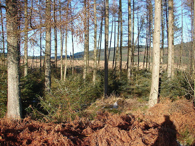 Hafren Forest - geograph.org.uk - 1113858