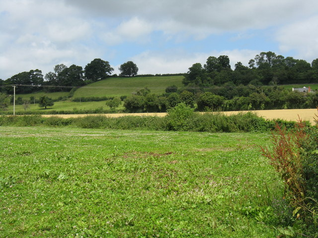 Hillside north of Bishop's Frome - geograph.org.uk - 892617