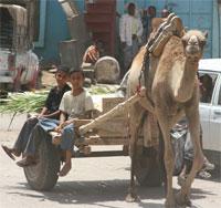 Jaʿār Town in Abyan Governorate, Yemen