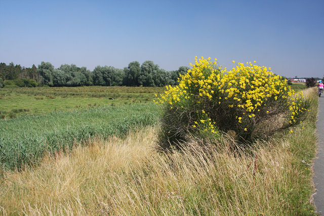 Kingston Marshes - geograph.org.uk - 900877