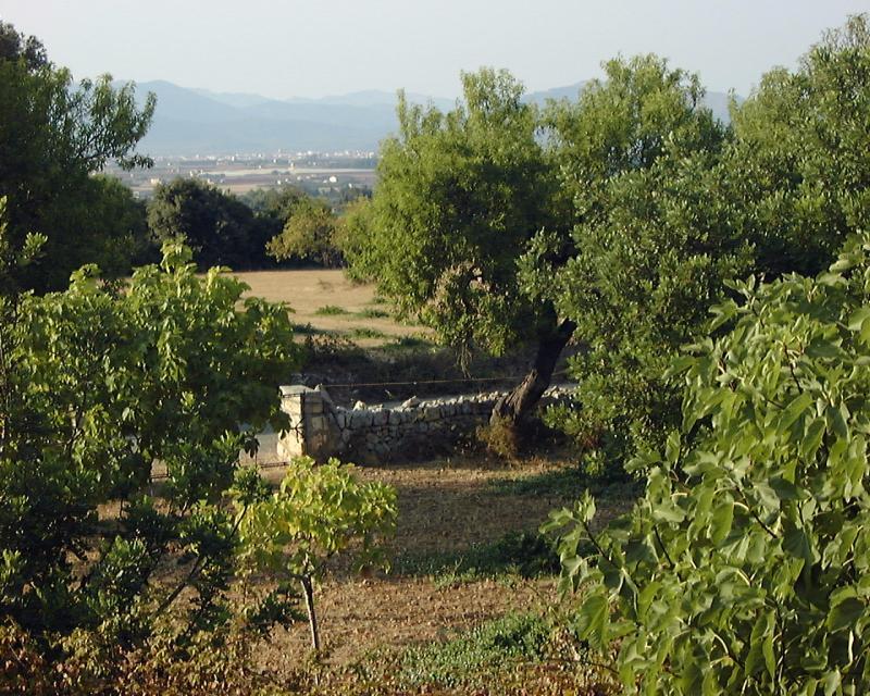 Mallorca im Hochsommer