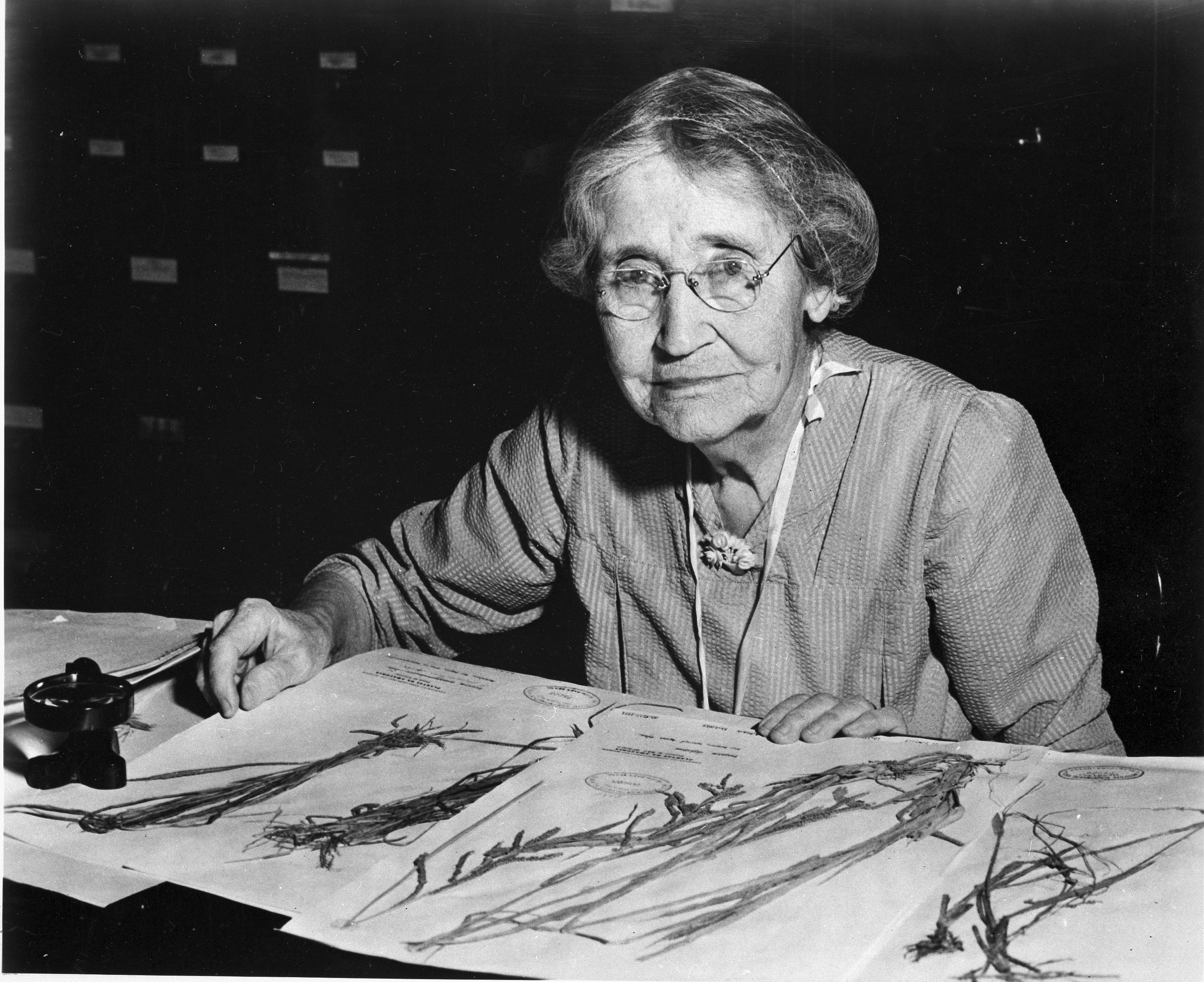 Mary Agnes Chase (1869-1963), sitting at desk with specimens, SIA2009-0712