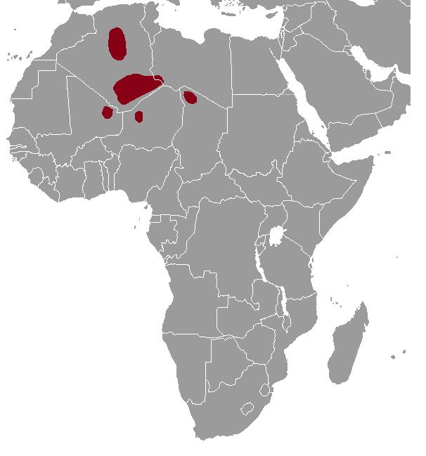 The average litter size of a Mzab gundi is 2