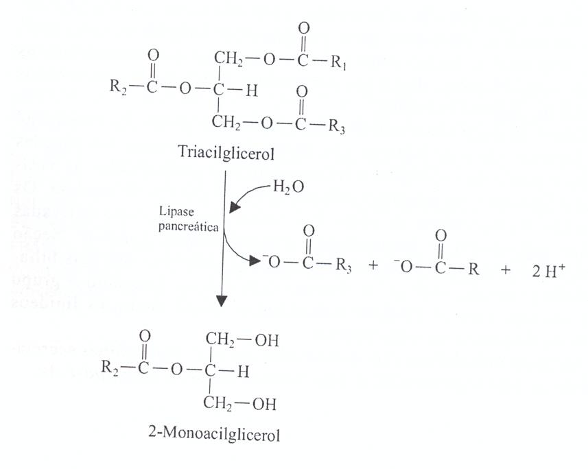 File:Metabolismo lip