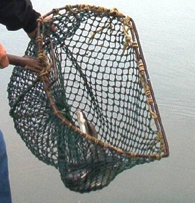 Antique Fifhing Net Glass Floats