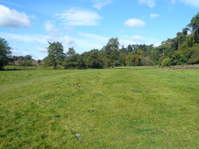 Pasture between Beresford Dale and Wolfscote Dale - geograph.org.uk - 559576