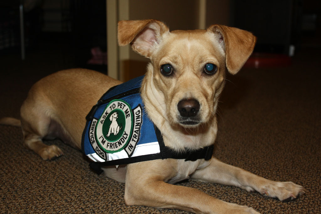 Service Dogs Should Be Burried In The Military Cemtary