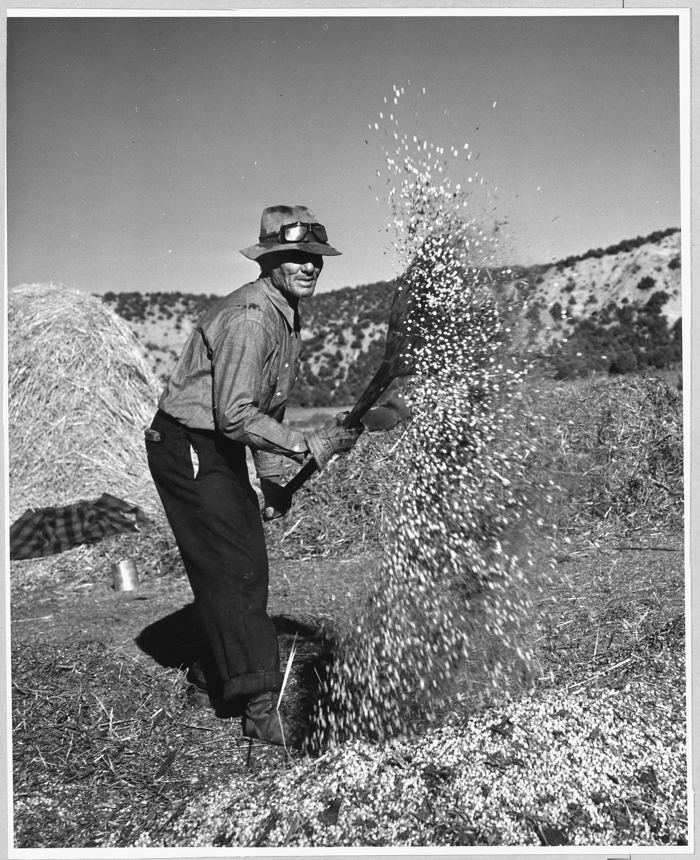 New mexico taos county penasco - File Taos County New Mexico Threshing Peas Penasco On This Day