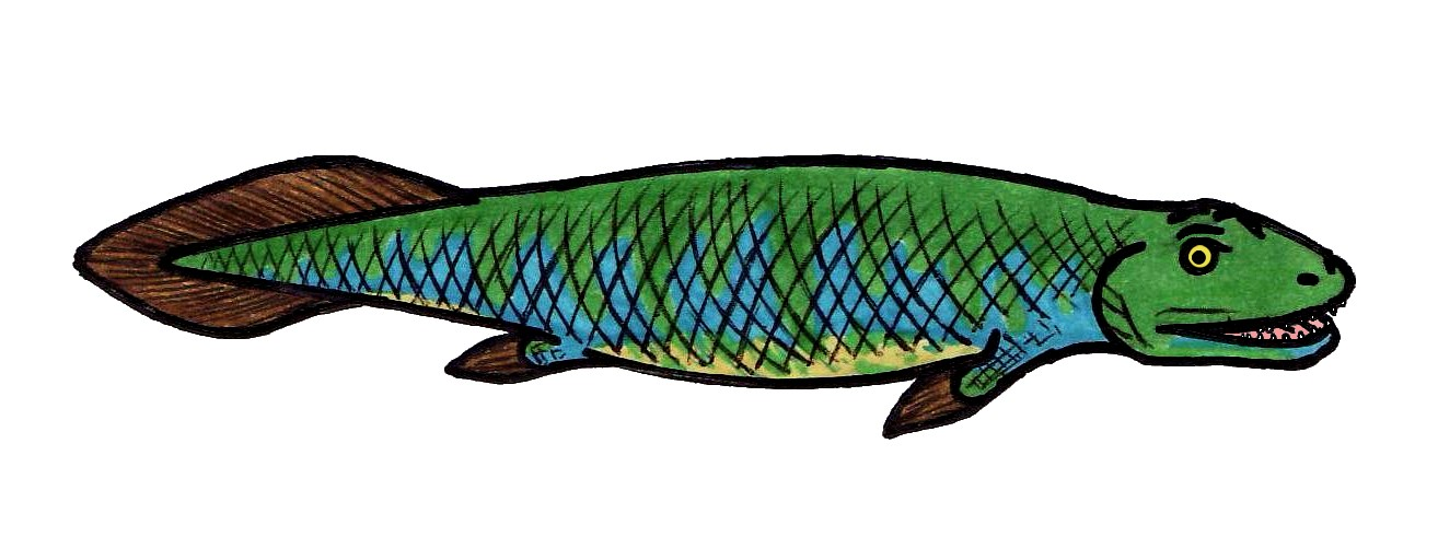 Drawiing of a happy, green and blue Tiktaalik Wikimedia Commons