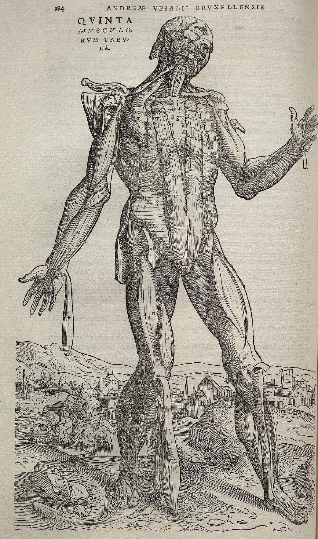Vesalio y la anatomía humana | El blog de Enzo David