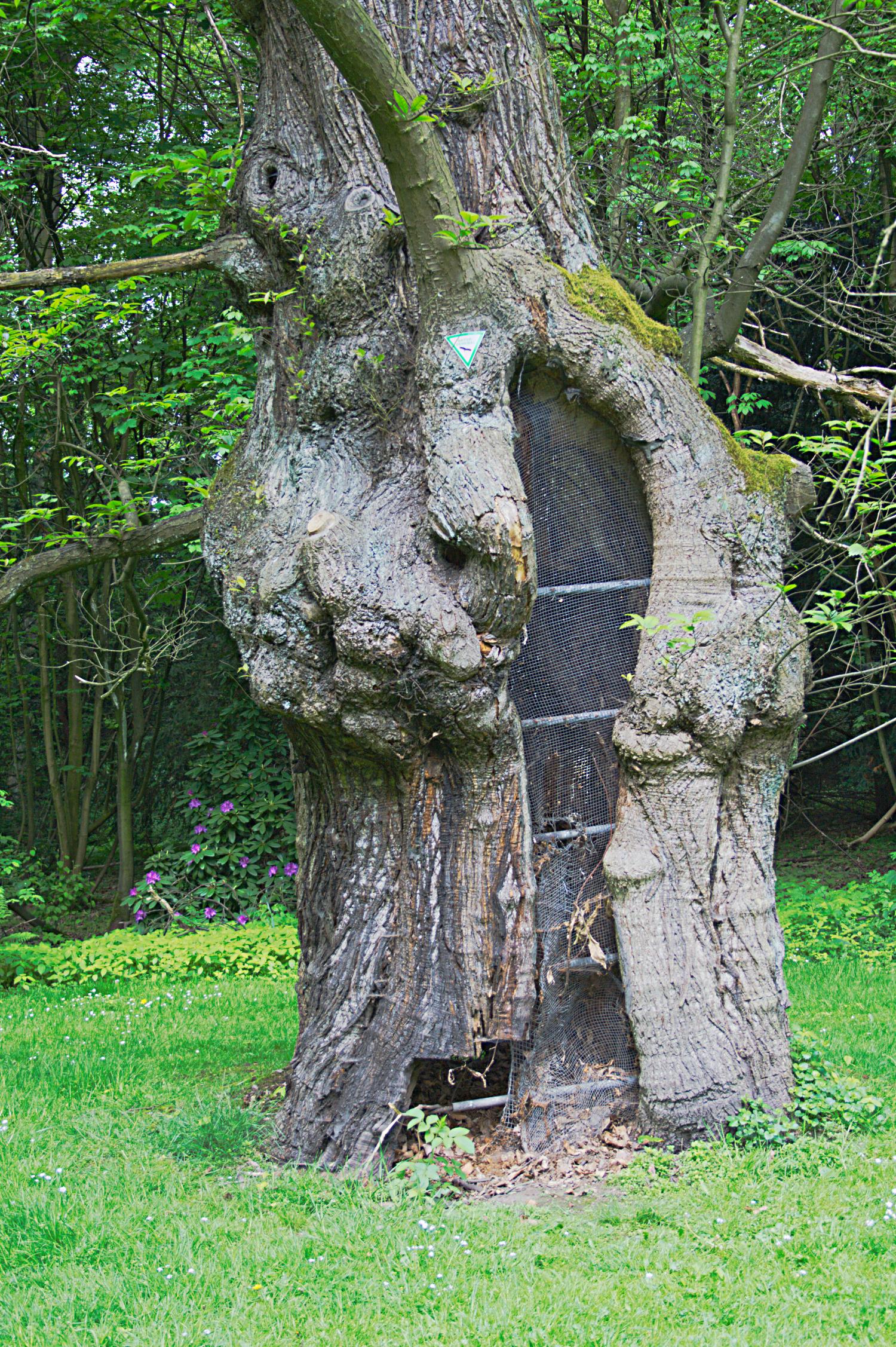 Charming File:2012 05 Naturdenkmal Marone Bochum Haus Weitmar (NRW) 01