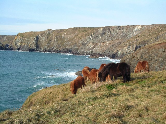 Between Lizard Point and Kynance Cove - geograph.org.uk - 23895