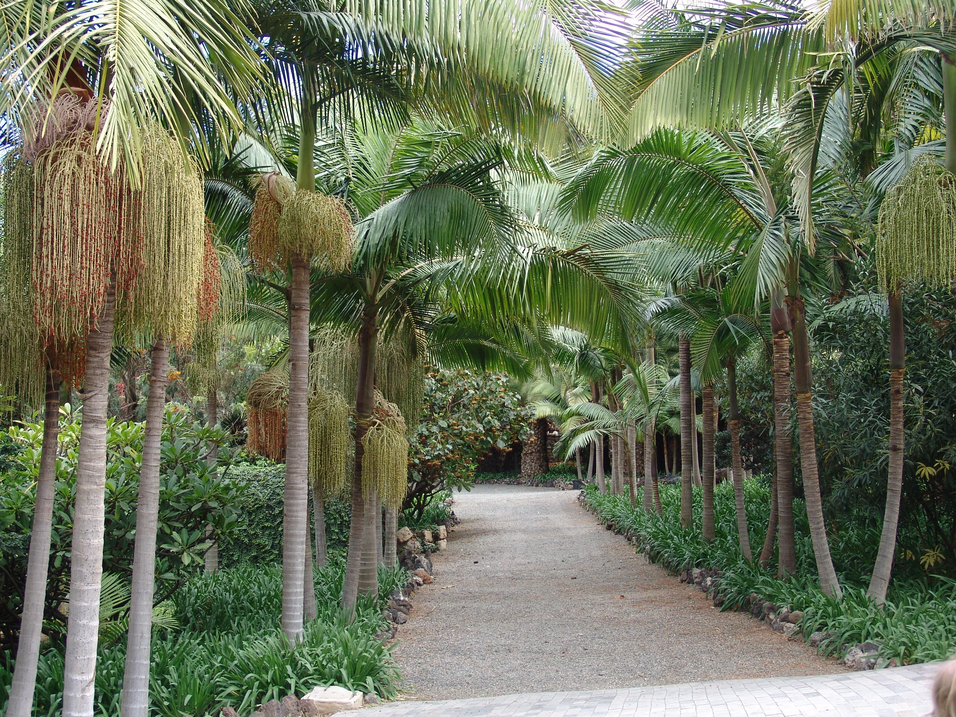 File wikimedia - Jardin botanico las palmas ...