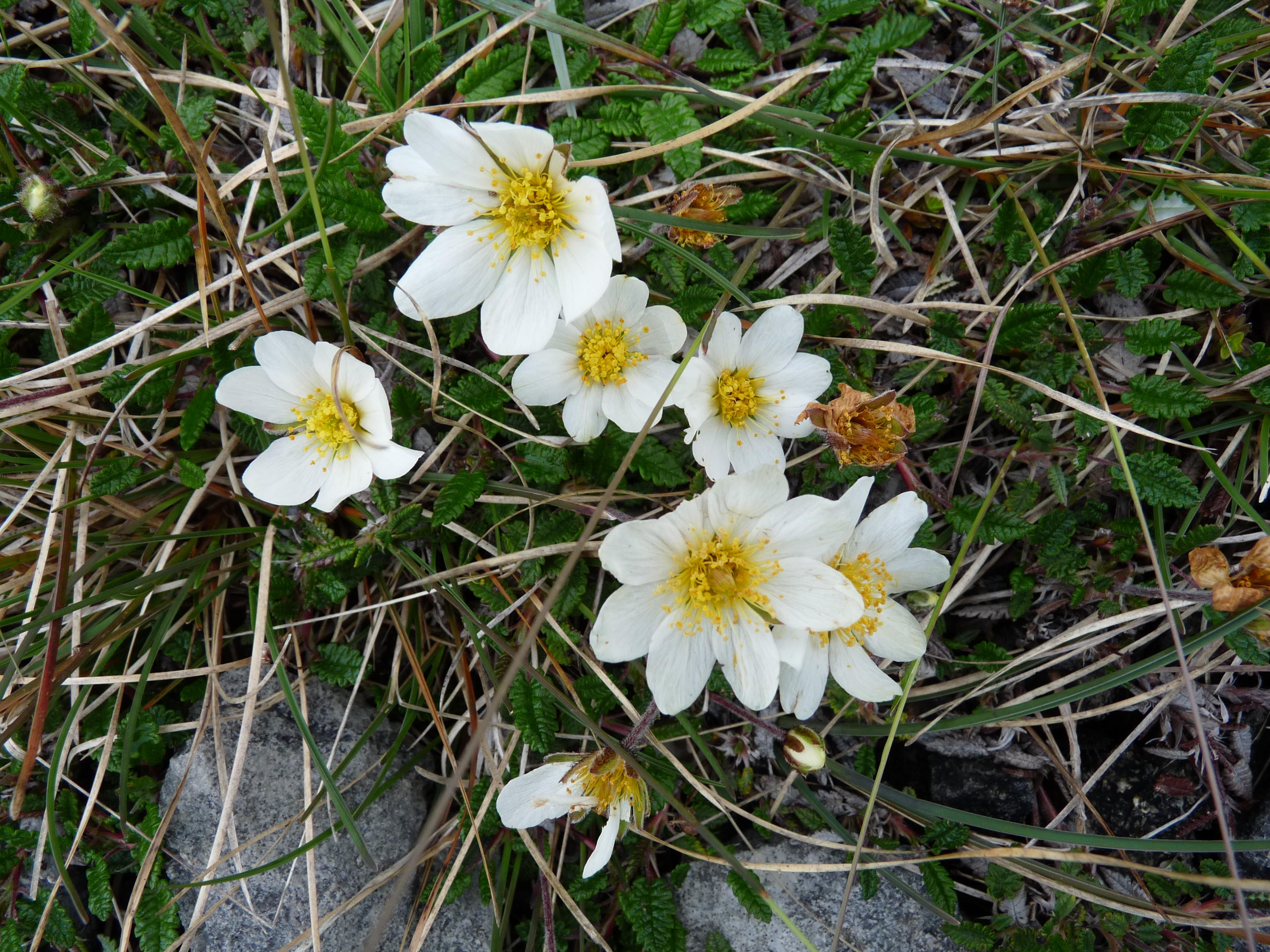 Rezultat iskanja slik za flora