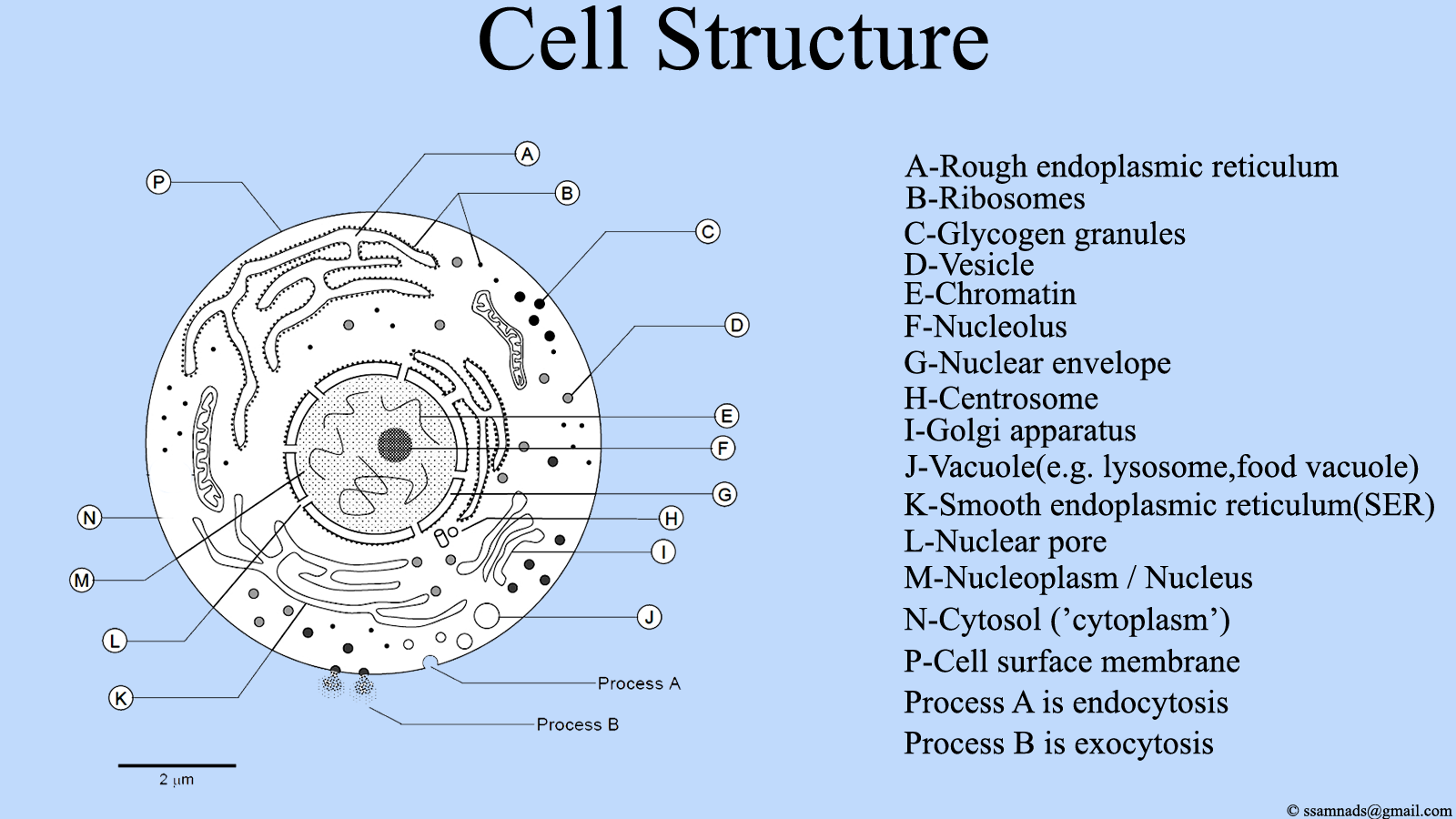 Parts Of A Cell Diagram