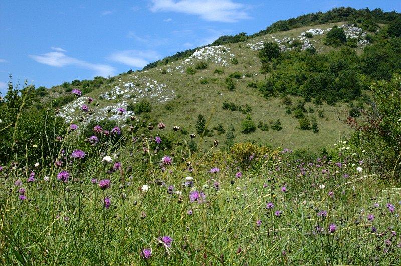 Národná prírodná rezervácia Devínska Kobyla