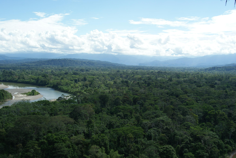 Indigenous Communities File Suit Against Ecuadorian Government to Protect Amazon