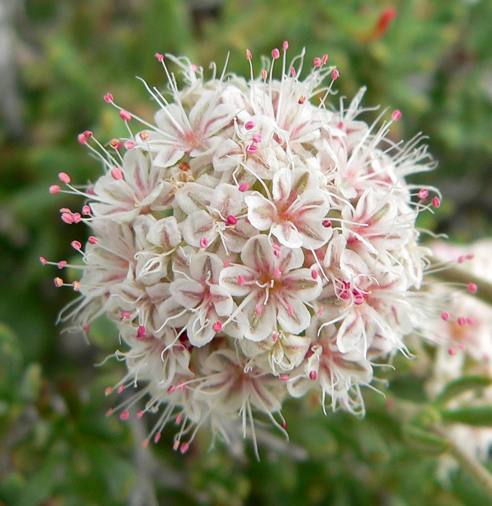 Opinions On List Of California Native Plants