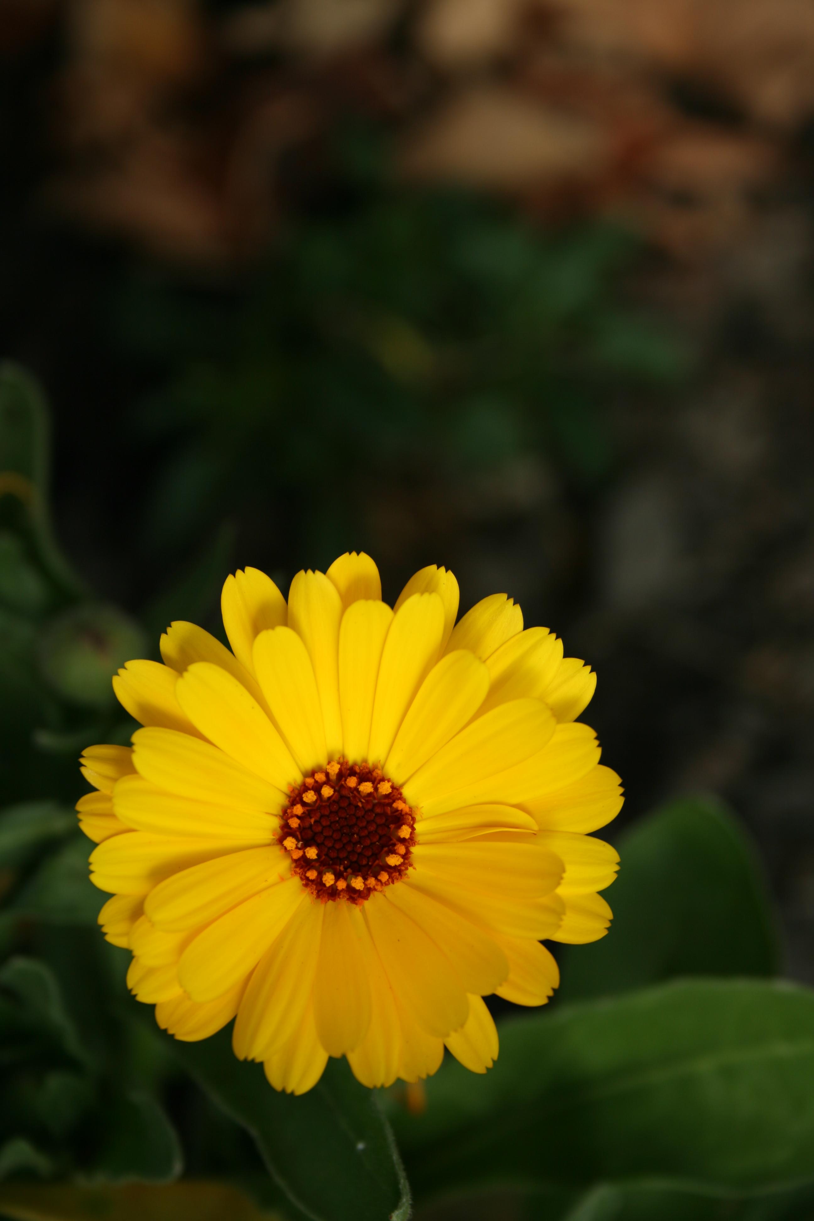 File Flower at 100 ISO for parison JPG Wikimedia mons