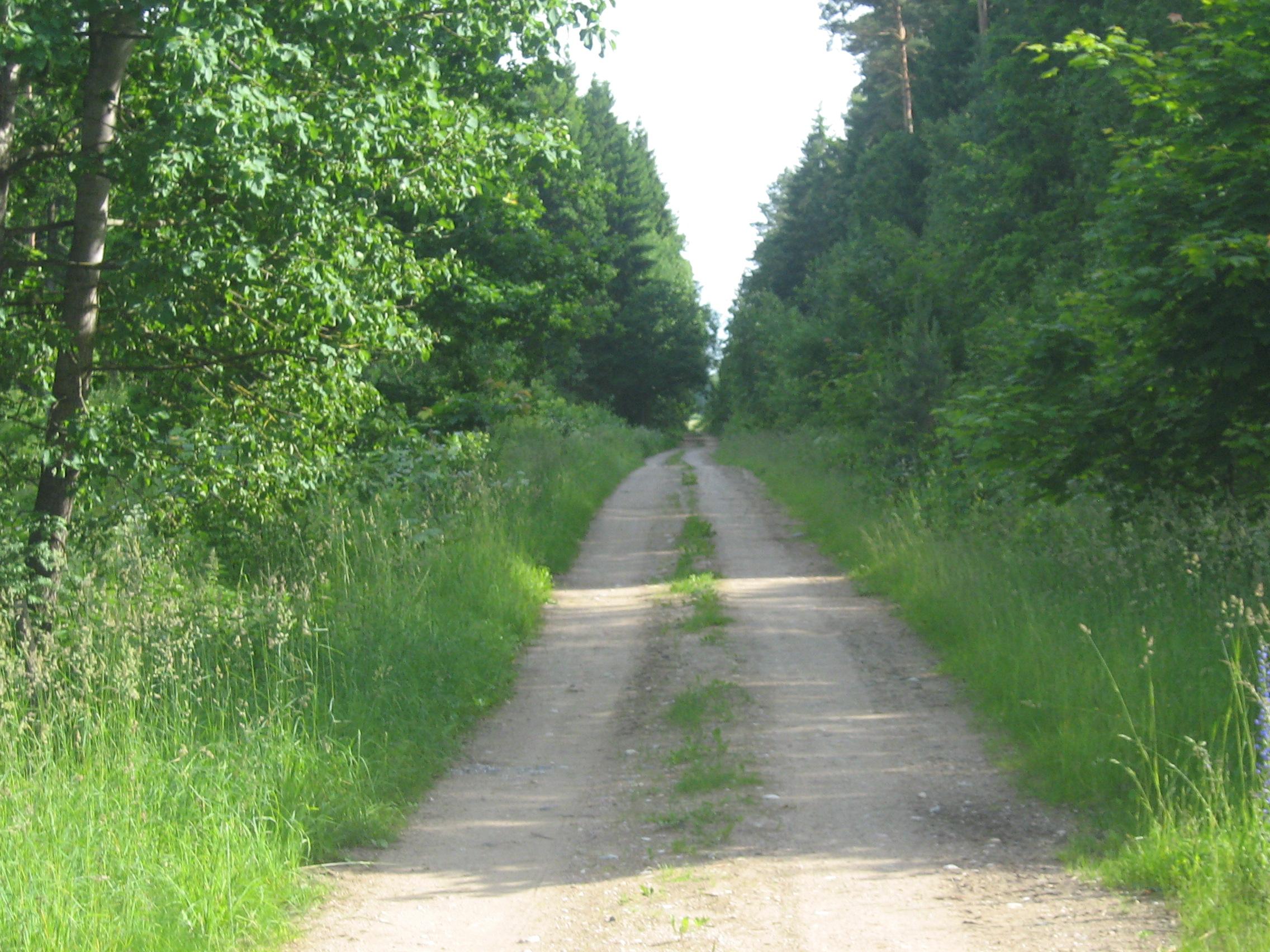 File Forest Road In Ltu Jpg Wikimedia Commons