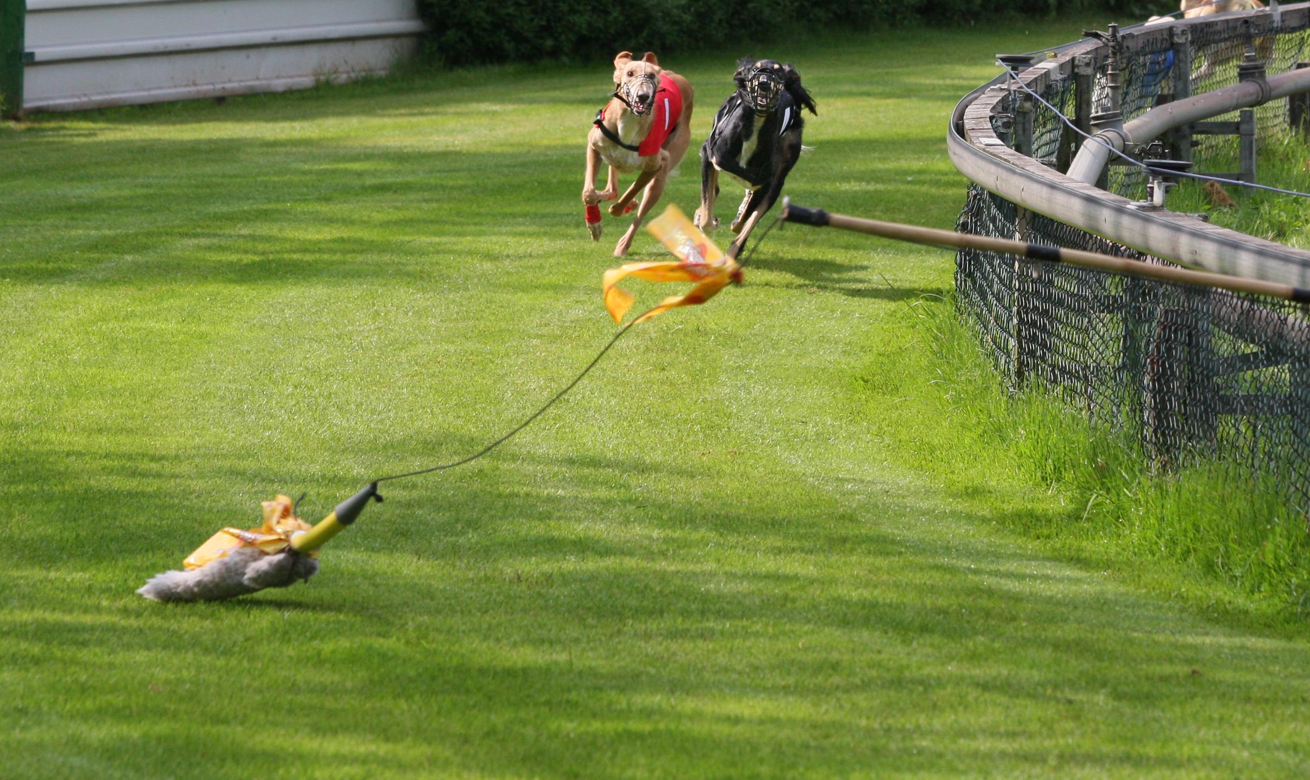 Image Result For In Kennel Dog