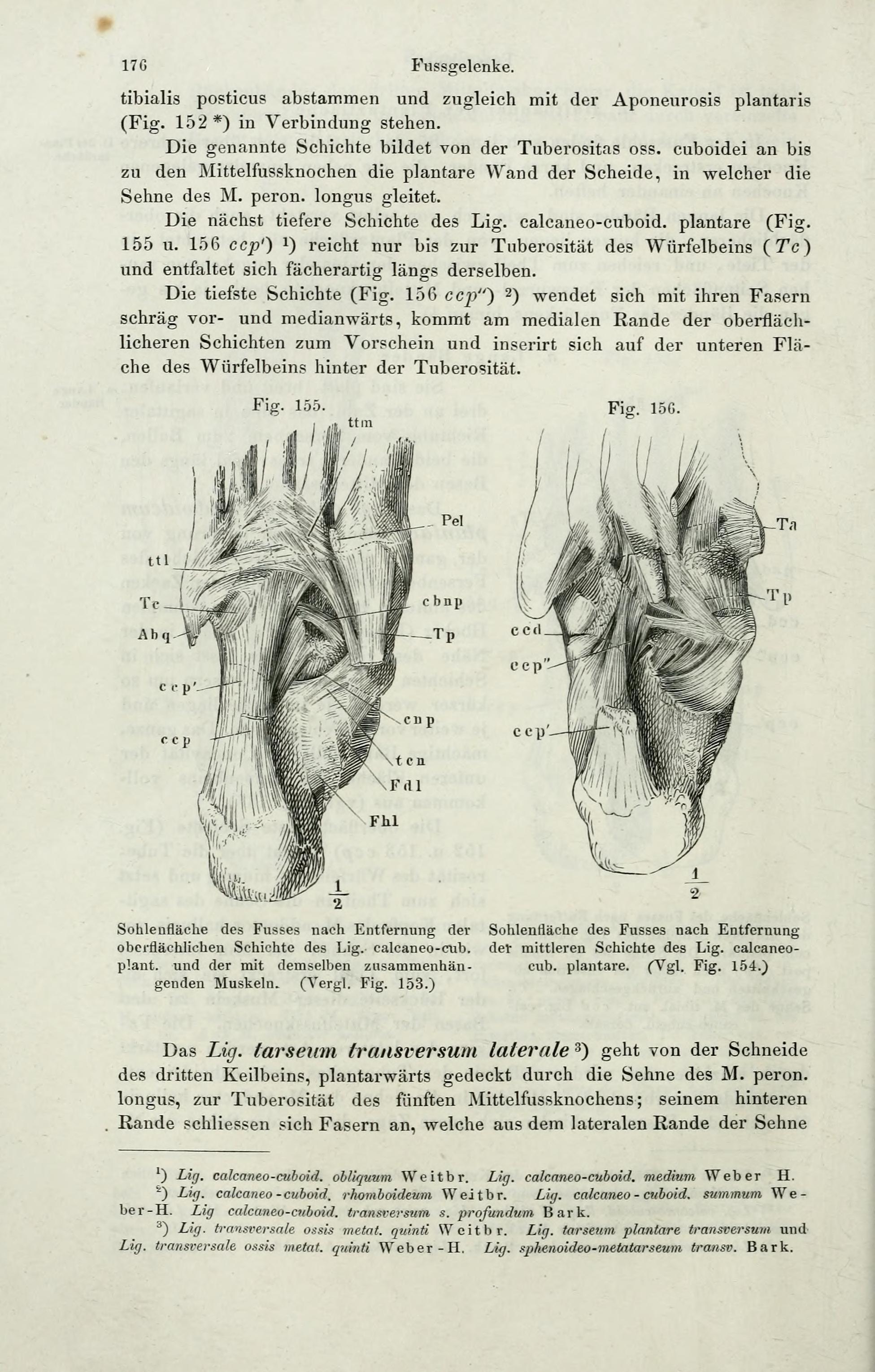 File:Handbuch der systematischen Anatomie des Menschen (Page 176 ...