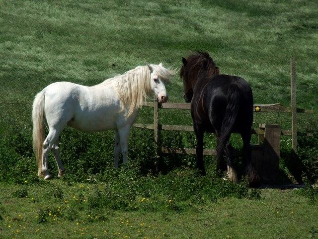 Horses at Snipe Dales - geograph.org.uk - 456336