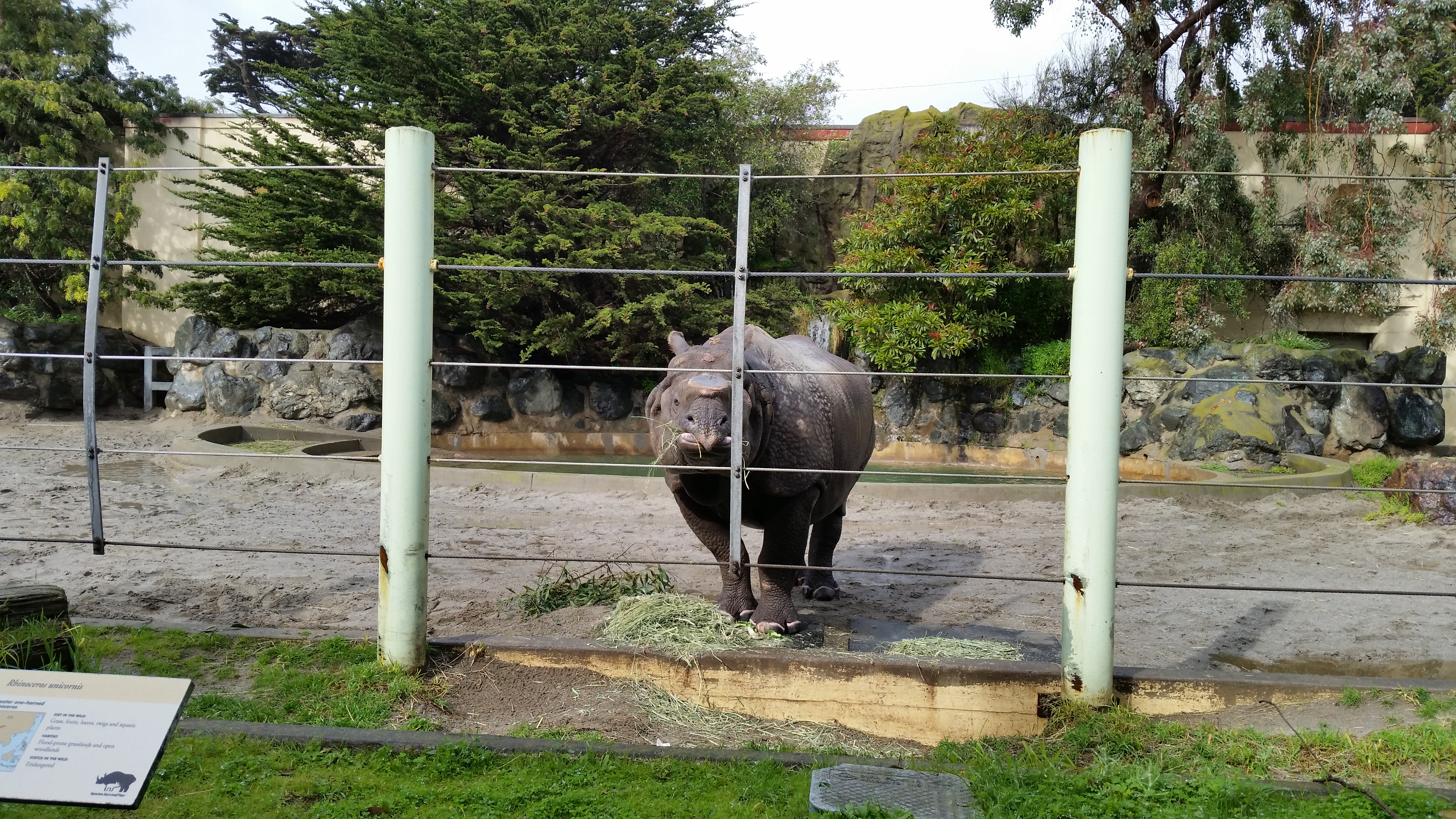 File:Indian Rhino at the San Francisco Zoo 03 jpg