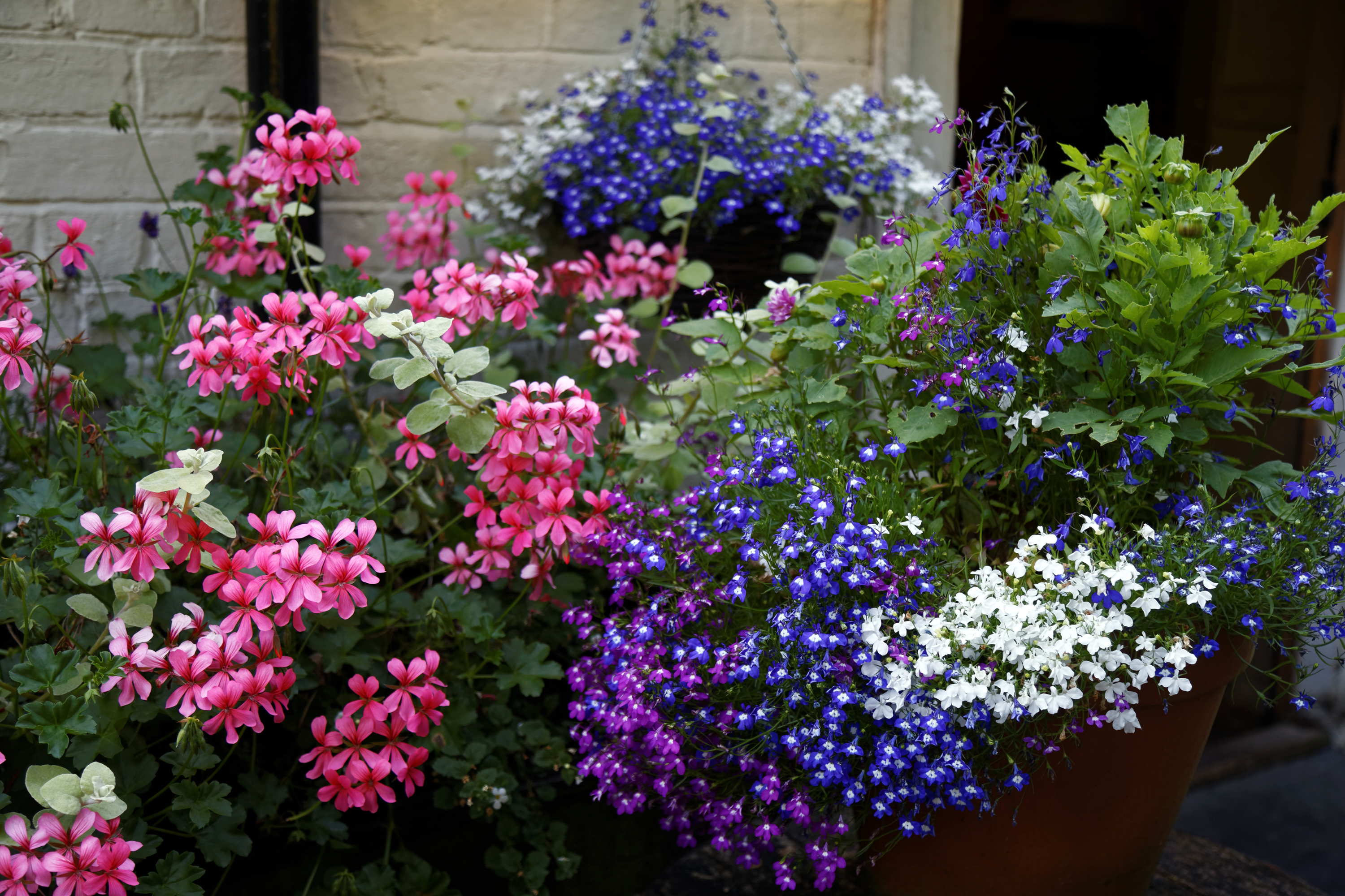 Filemixed Potted Plant Flowers In A Beer Garden At Nuthurst West